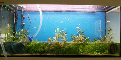 Aquaworld aquarium article water changes how much for Why is my fish tank foggy