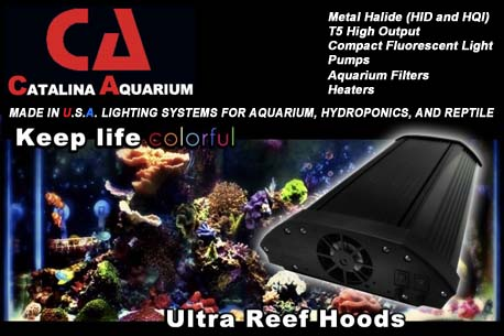 CLICK HERE to see what Catalina Aquarium can do for you!