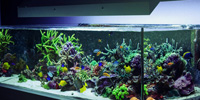 How to Choose the Best Lighting for Saltwater Aquariums
